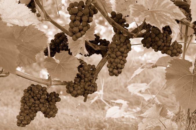 Vin0116